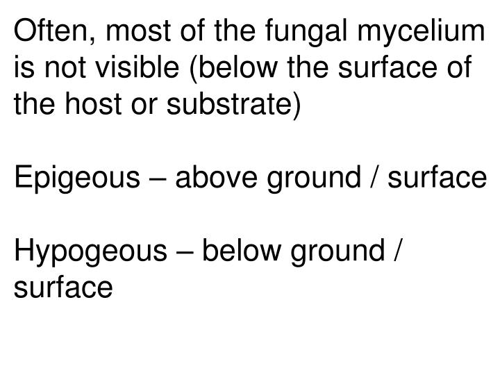 Often, most of the fungal mycelium is not visible (below the surface of the host or substrate)