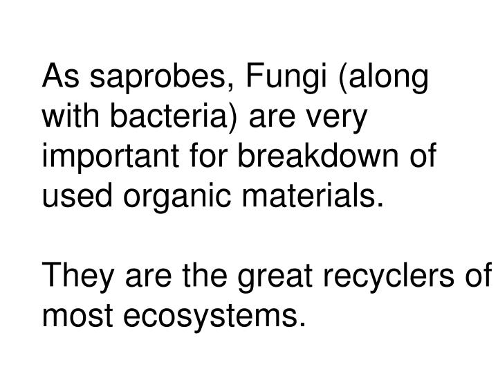 As saprobes, Fungi (along with bacteria) are very important for breakdown of used organic materials.