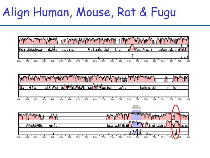 Align Human, Mouse, Rat & Fugu