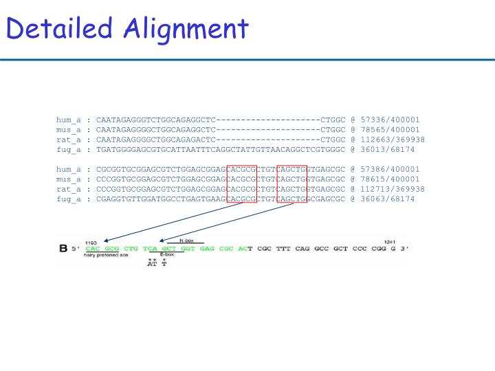 Detailed Alignment
