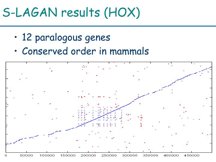 S-LAGAN results (HOX)