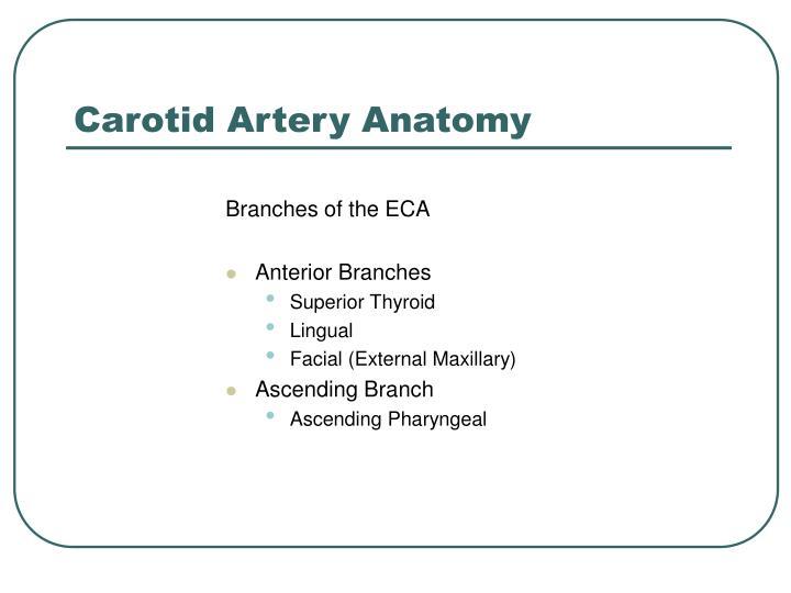 Carotid Artery Anatomy