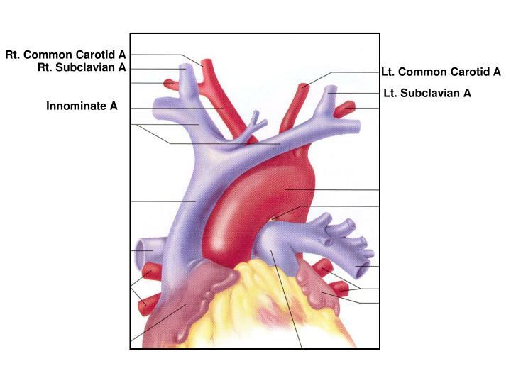 Rt. Common Carotid A