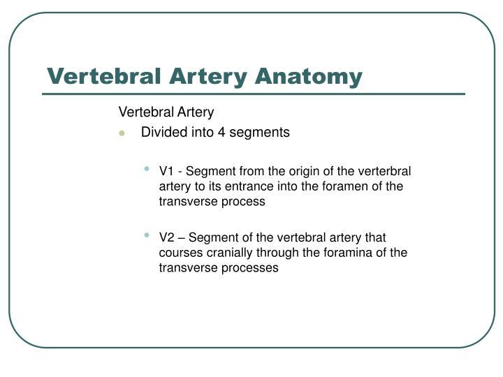 Vertebral Artery Anatomy