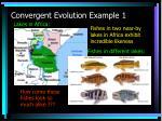 convergent evolution example 1
