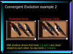 convergent evolution example 2