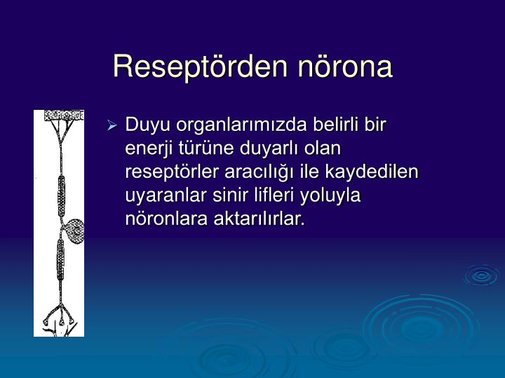 Reseptörden nörona
