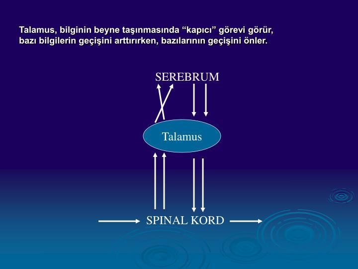 """Talamus, bilginin beyne taşınmasında """"kapıcı"""" görevi görür,"""