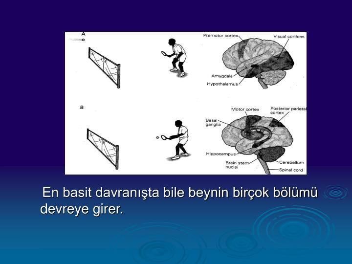 En basit davranışta bile beynin birçok bölümü devreye girer.