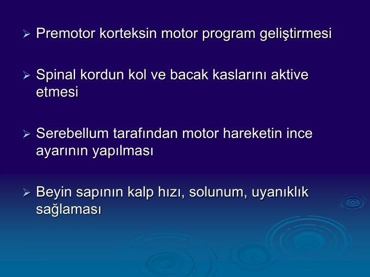 Premotor korteksin motor program geliştirmesi
