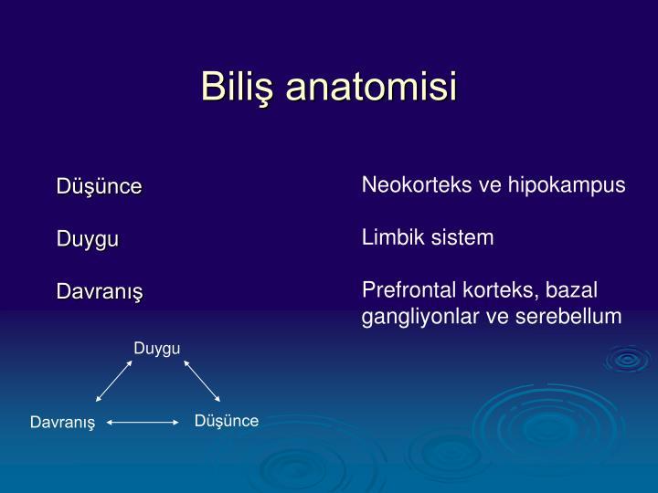 Biliş anatomisi