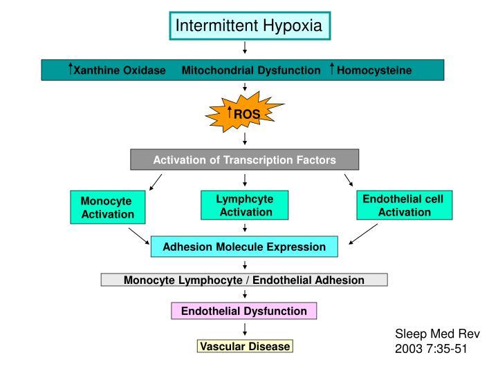 Intermittent Hypoxia
