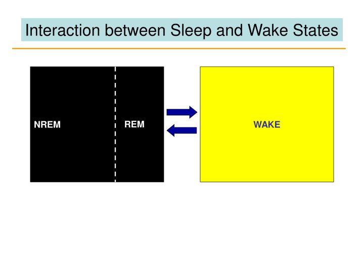 Interaction between Sleep and Wake States