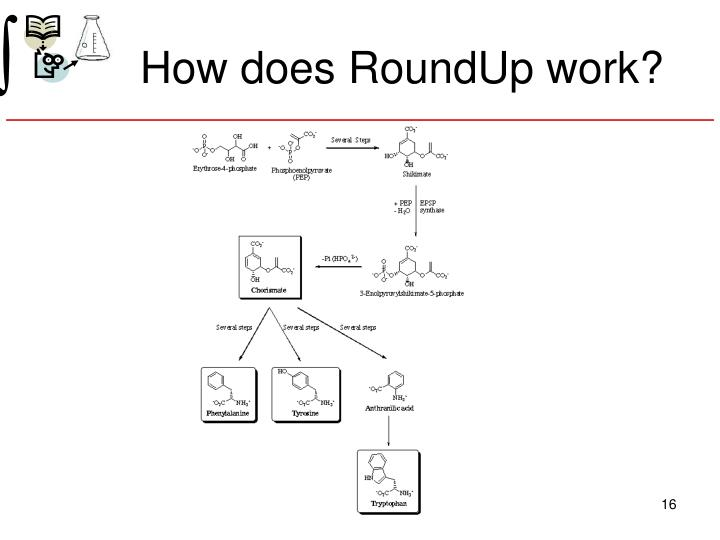 How does RoundUp work?