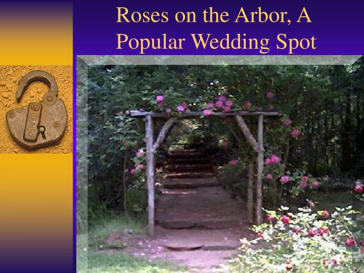 Roses on the arbor a popular wedding spot