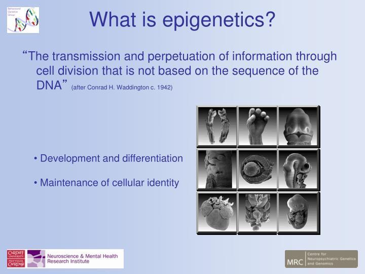 What is epigenetics1