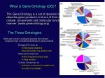 what is gene ontology go
