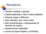 plecopteros