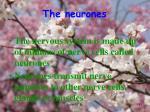 the neurones