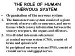 the role of human nervous system