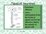 types of neurones1