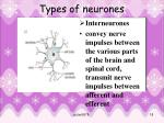 types of neurones2