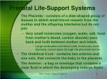 prenatal life support systems