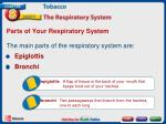 parts of your respiratory system1