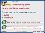 parts of your respiratory system2