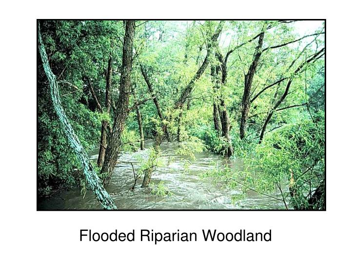 Flooded Riparian Woodland