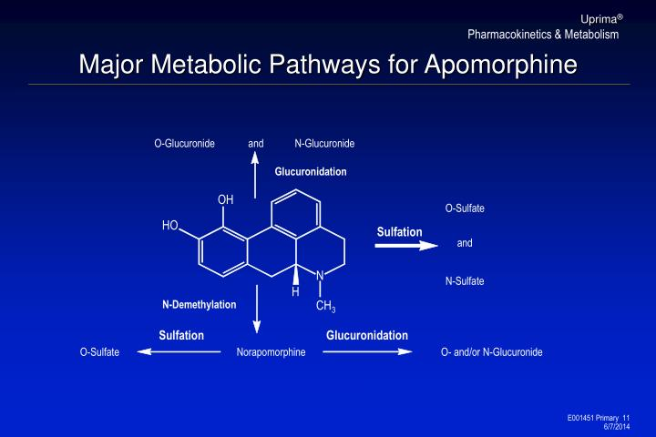 Major Metabolic Pathways for Apomorphine