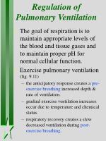 regulation of pulmonary ventilation1