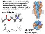 acetylchol n