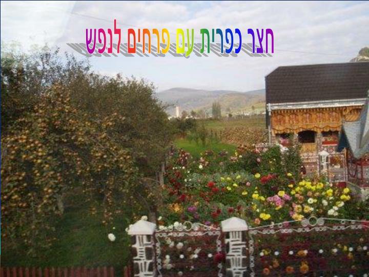 חצר כפרית עם פרחים לנפש