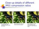 close up details of different jpeg compression ratios