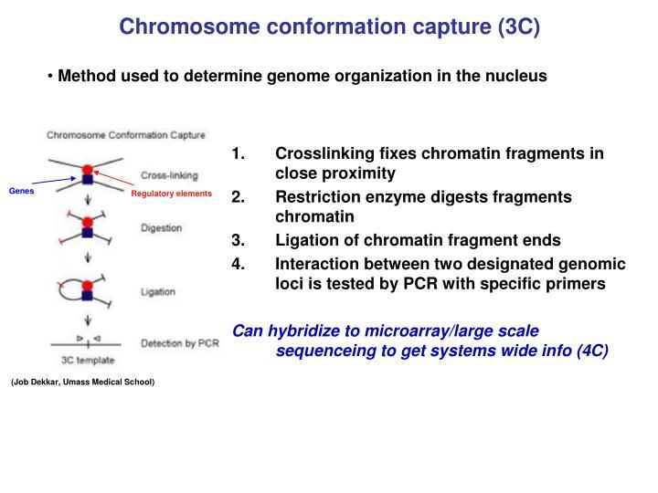 Chromosome conformation capture (3C)