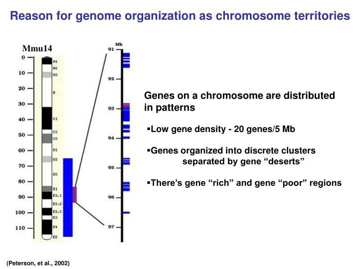 Reason for genome organization as chromosome territories
