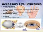 accessory eye structures