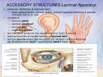 accessory structures lacrimal apparatus