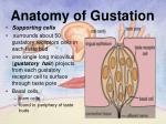 anatomy of gustation1