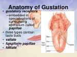 anatomy of gustation2