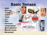 basic senses
