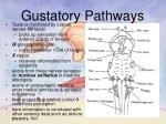 gustatory pathways