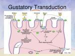 gustatory transduction2