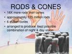 rods cones