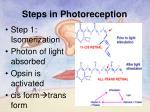 steps in photoreception