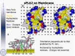 spla2 on membrane