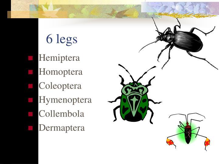 6 legs