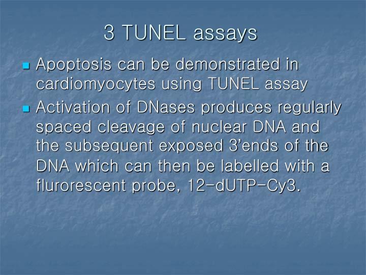 3 TUNEL assays