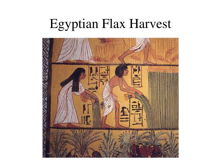 Egyptian Flax Harvest